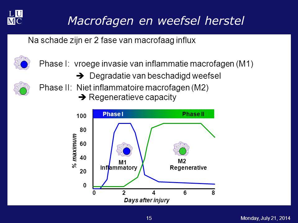 Monday, July 21, 201415 Macrofagen en weefsel herstel Na schade zijn er 2 fase van macrofaag influx Phase I: vroege invasie van inflammatie macrofagen (M1)  Degradatie van beschadigd weefsel Phase II: Niet inflammatoire macrofagen (M2)  Regeneratieve capacity 100 80 60 40 20 0 0 2 4 6 8 Days after injury % maximum Phase I Phase II M1 M2 InflammatoryRegenerative