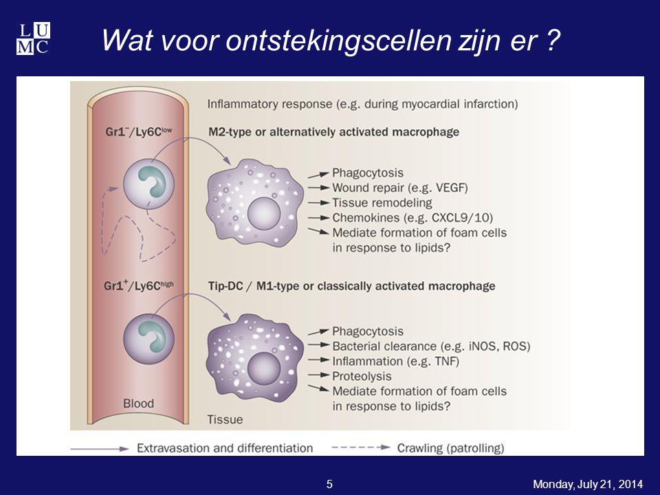 Monday, July 21, 201416 Wat doen M2 macrofagen