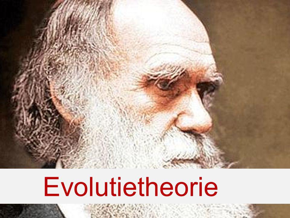 3) Ontstaan van nieuwe soorten Evolutie-theorie gaat uit van:- Variatie in erfelijke eigenschappen -Natuurlijke selectie -Ontstaan van nieuwe soorten 2) Aanpassing aan omstandigheden 1) Isolatie