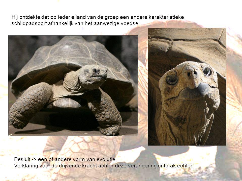 Galapagosbuizerd: enige echte roofdier op Galapagos Galapagos eilanden