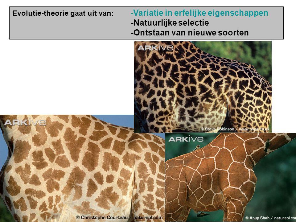 Evolutie-theorie gaat uit van:- Variatie in erfelijke eigenschappen -Natuurlijke selectie -Ontstaan van nieuwe soorten