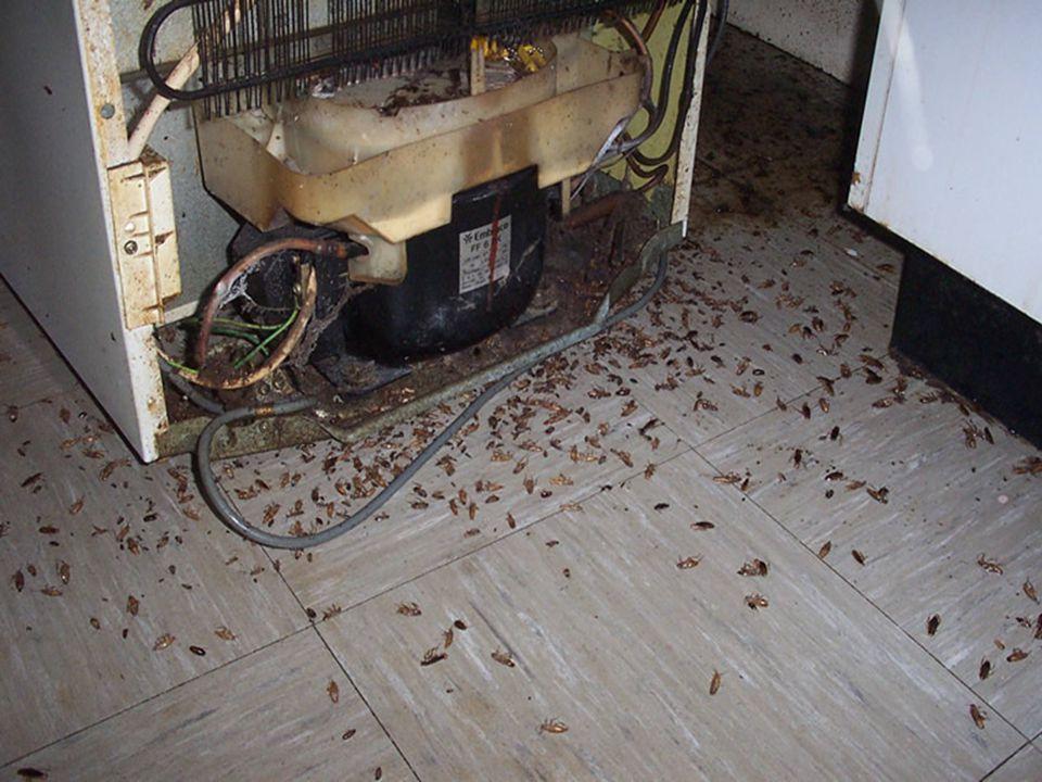 Binnen 7 maanden 1 paar kakkerlakken: 164.000.000.000 nakomelingen kunnen krijgen…. Evolutie-theorie gaat uit van:- Variatie in erfelijke eigenschappe