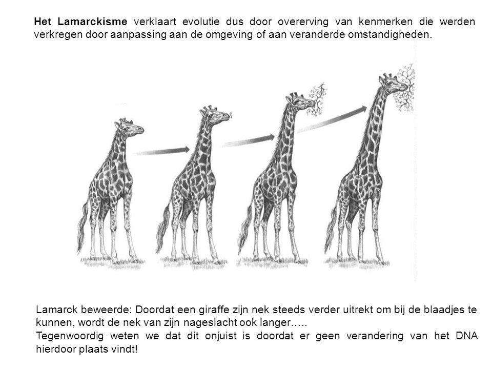 Lamarck beweerde: Doordat een giraffe zijn nek steeds verder uitrekt om bij de blaadjes te kunnen, wordt de nek van zijn nageslacht ook langer…..