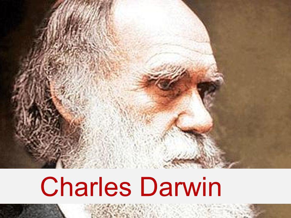 Evolutie door natuurlijke selectie Darwin concludeerde dat natuurlijke selectie kon verklaren hoe organismen langzaamaan veranderen en evolueerden in nieuwe soorten.