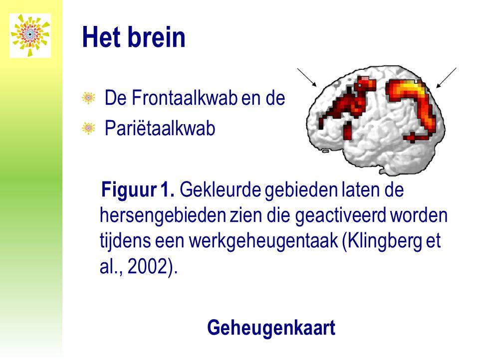Het brein De Frontaalkwab en de Pariëtaalkwab Figuur 1. Gekleurde gebieden laten de hersengebieden zien die geactiveerd worden tijdens een werkgeheuge
