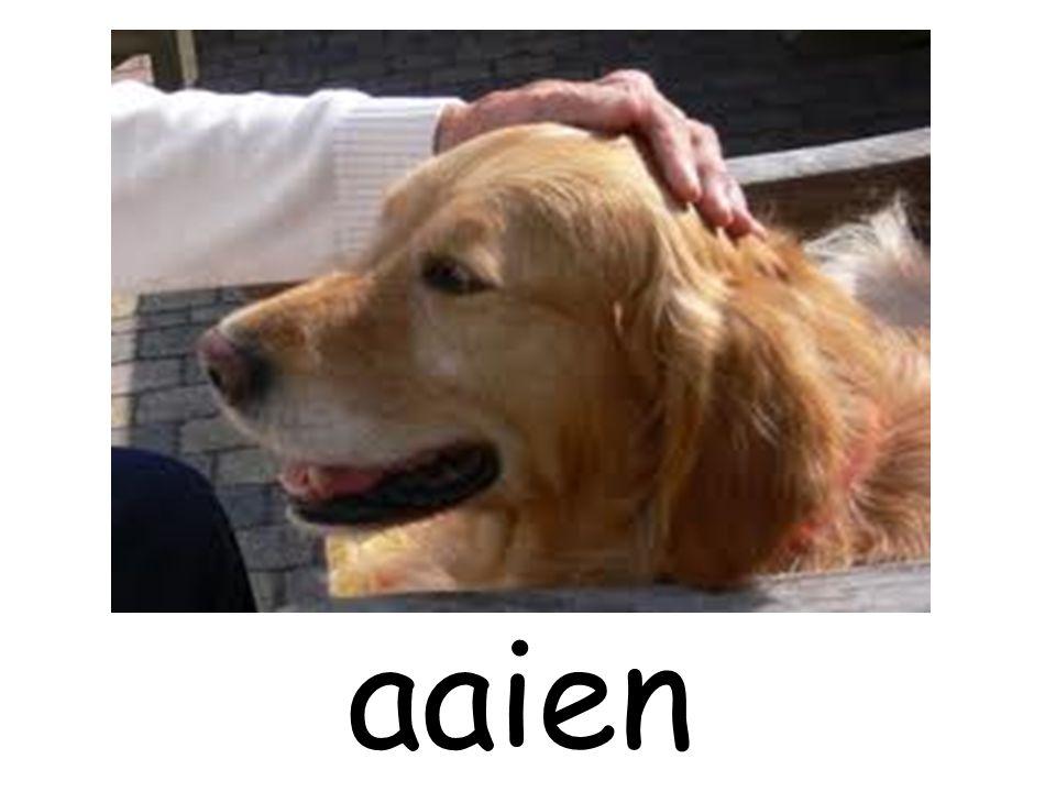 aaien