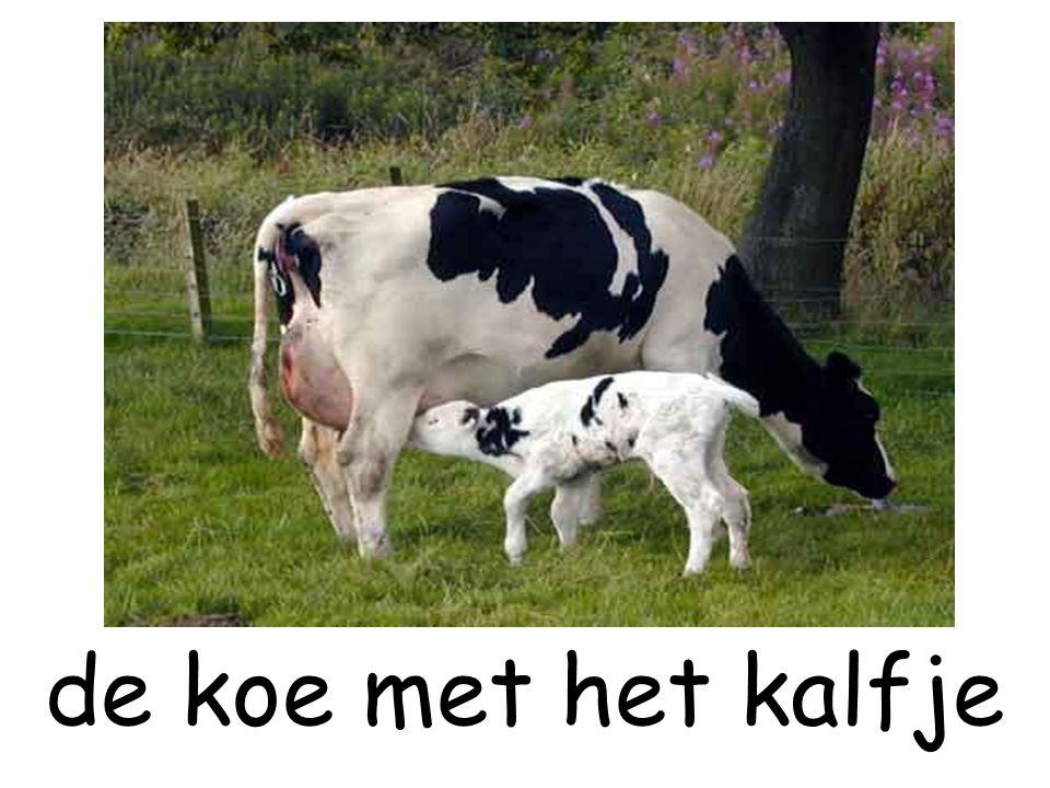 de koe met het kalfje