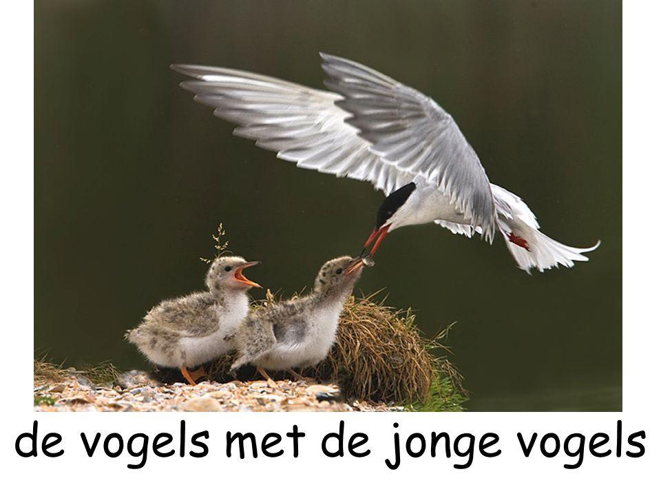 de vogels met de jonge vogels