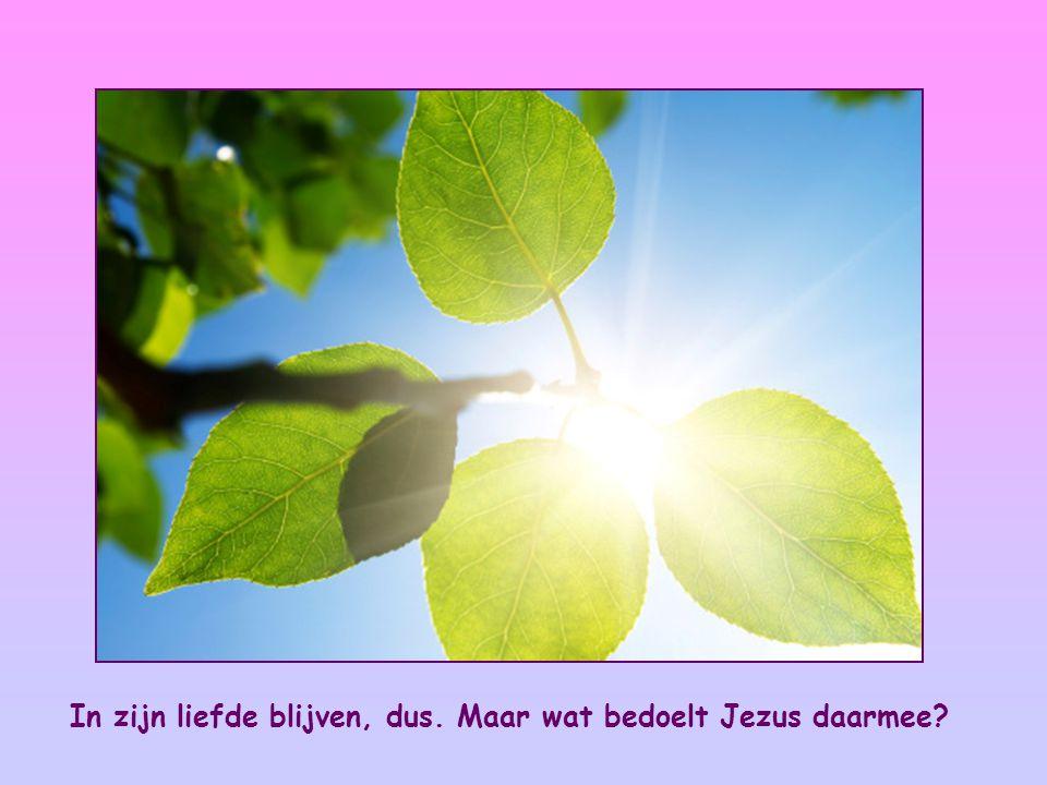 Je blijft in mijn liefde als je aan mijn geboden houdt, zoals ik me ook aan de geboden van mijn Vader gehouden heb en in zijn liefde blijf. Johannes 15,10