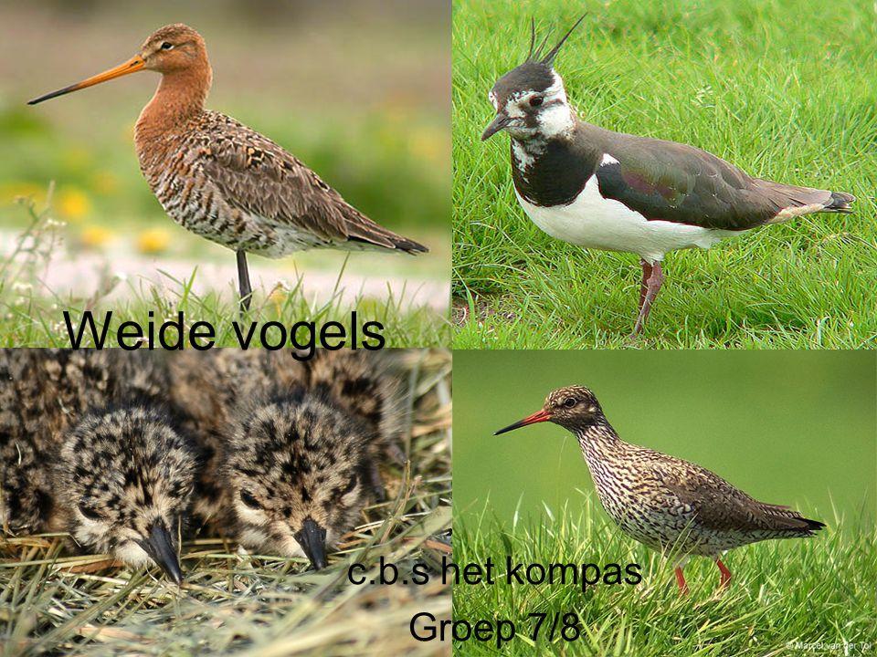 Weide vogels c.b.s het kompas Groep 7/8