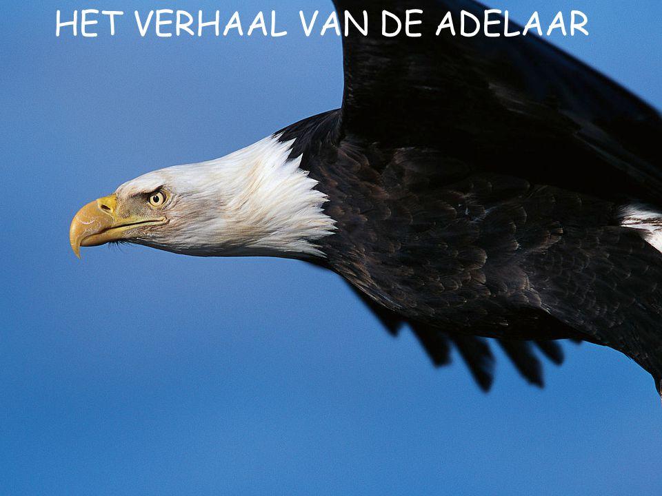 HET VERHAAL VAN DE ADELAAR
