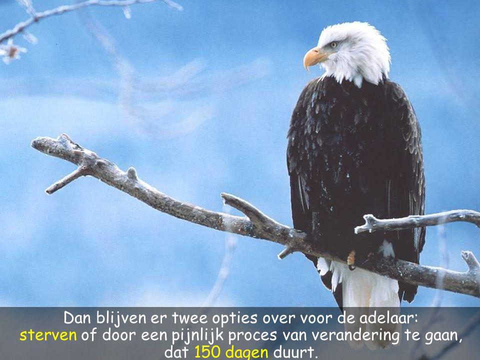 Dan blijven er twee opties over voor de adelaar: sterven of door een pijnlijk proces van verandering te gaan, dat 150 dagen duurt.