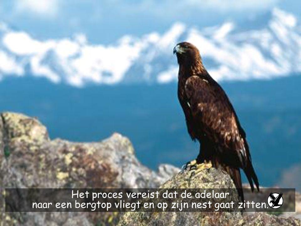 Het proces vereist dat de adelaar naar een bergtop vliegt en op zijn nest gaat zitten.