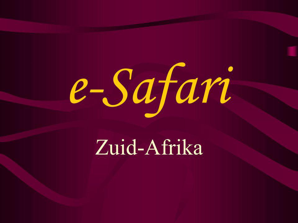 e-Safari Zuid-Afrika