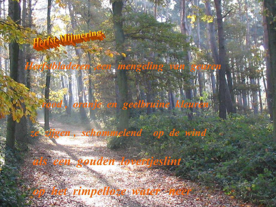 Herfstbladeren,een mengeling van geuren rood, oranje en geelbruine kleuren ze zijgen, schommelend op de wind als een gouden lovertjeslint op het rimpe