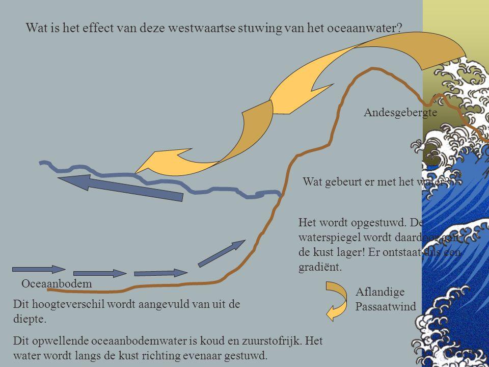 Wat is het effect van deze westwaartse stuwing van het oceaanwater? Oceaanbodem Andesgebergte Aflandige Passaatwind Wat gebeurt er met het water? Het