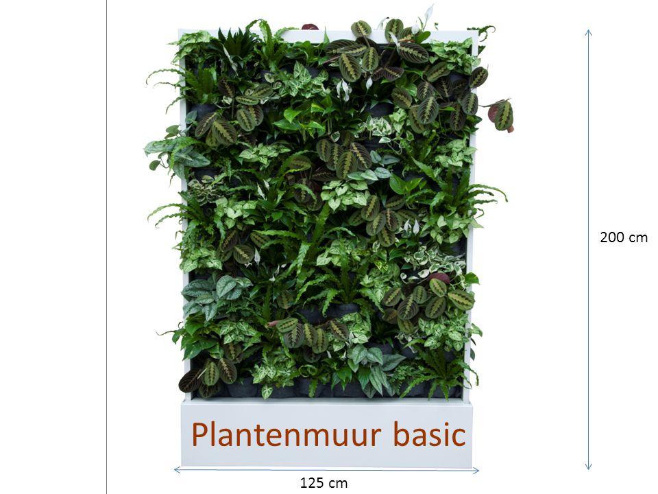 Plantenmuur basic 200 cm 125 cm