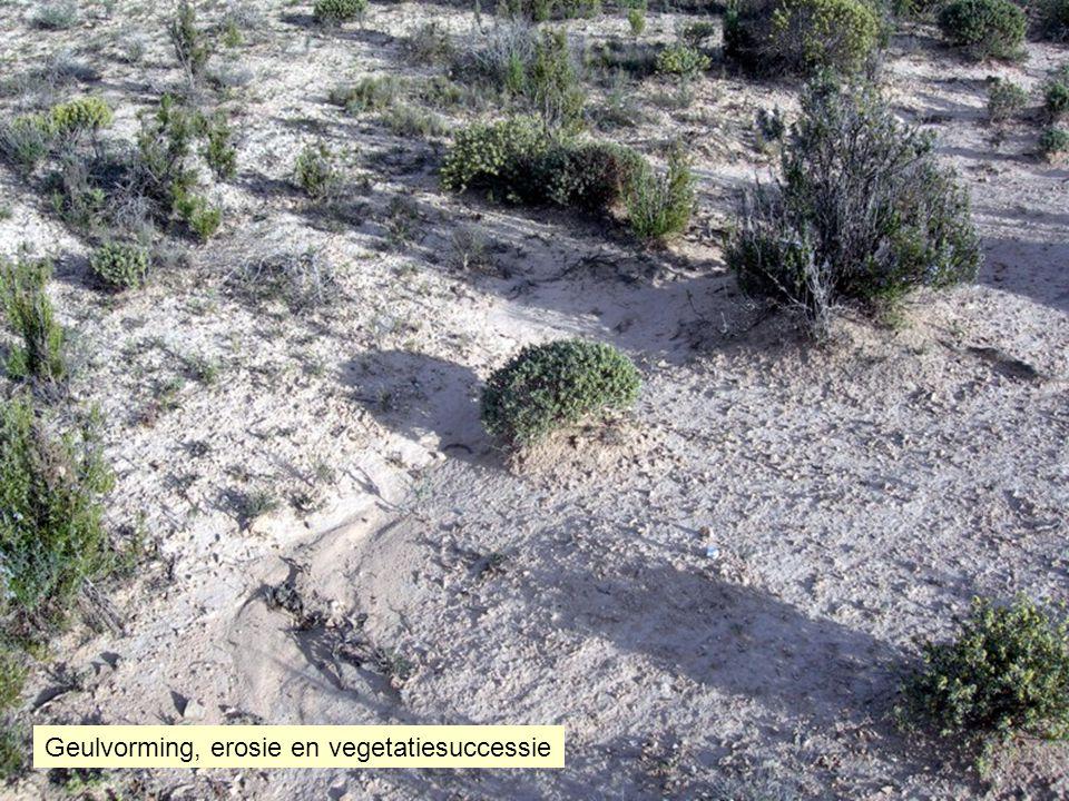 Geulvorming, erosie en vegetatiesuccessie