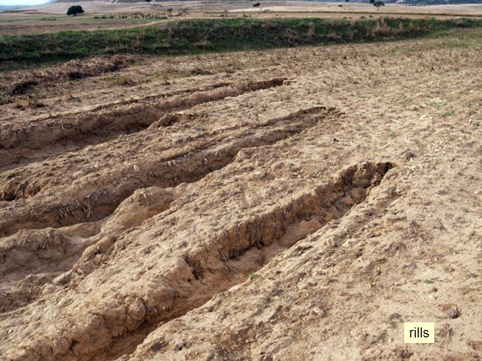 rill erosie