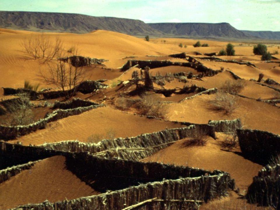 Mondiaal probleem Verwoestijning is een mondiaal probleem maar is ook belangrijk in Europa (Middellandse Zee gebied Oost Europa (Hongarije, Rusland, Oekraine)) bron: http://soils.usda.gov/use/worldsoils/mapindex/desert.html