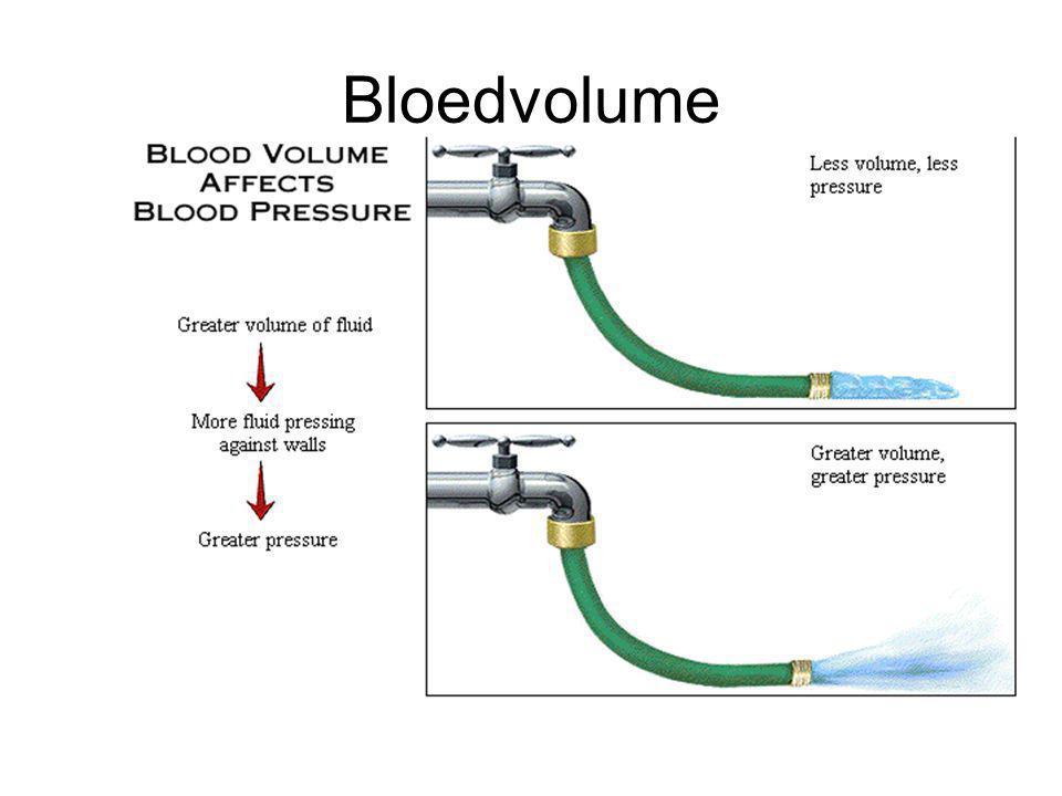 Bloedvolume