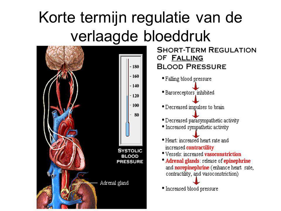 Korte termijn regulatie van de verlaagde bloeddruk