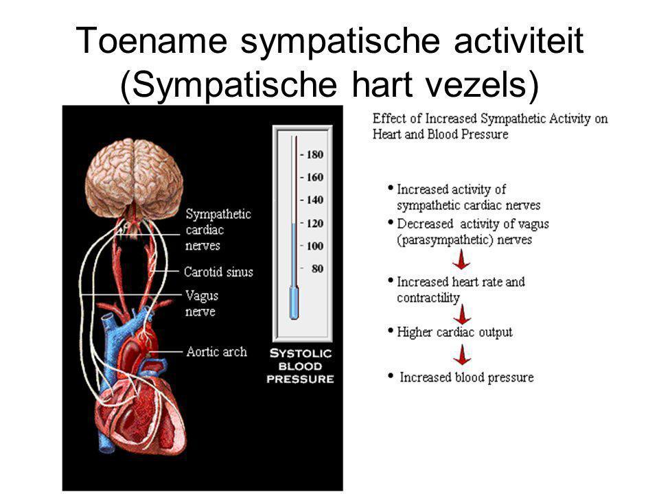 Toename sympatische activiteit (Sympatische hart vezels)