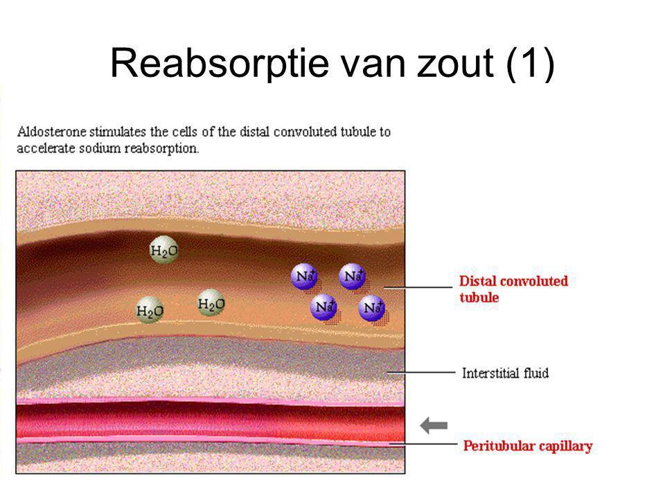 Reabsorptie van zout (1)