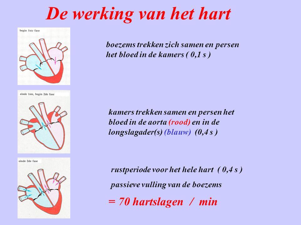 De werking van het hart boezems trekken zich samen en persen het bloed in de kamers ( 0,1 s ) kamers trekken samen en persen het bloed in de aorta (ro