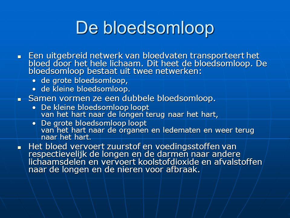 Een uitgebreid netwerk van bloedvaten transporteert het bloed door het hele lichaam. Dit heet de bloedsomloop. De bloedsomloop bestaat uit twee netwer