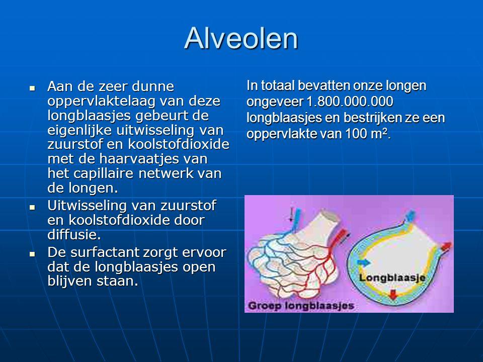 Alveolen Aan de zeer dunne oppervlaktelaag van deze longblaasjes gebeurt de eigenlijke uitwisseling van zuurstof en koolstofdioxide met de haarvaatjes