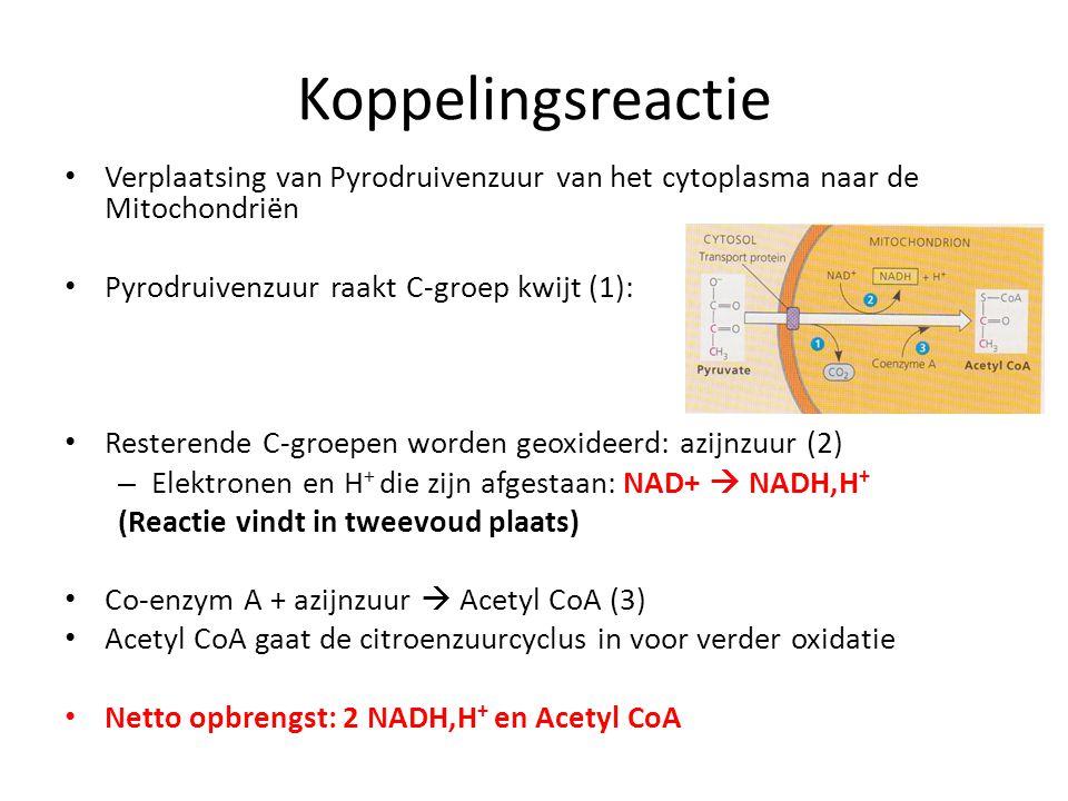 Koppelingsreactie Verplaatsing van Pyrodruivenzuur van het cytoplasma naar de Mitochondriën Pyrodruivenzuur raakt C-groep kwijt (1): Resterende C-groe