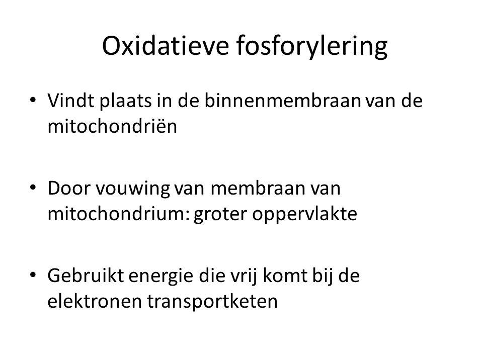 Oxidatieve fosforylering Vindt plaats in de binnenmembraan van de mitochondriën Door vouwing van membraan van mitochondrium: groter oppervlakte Gebrui