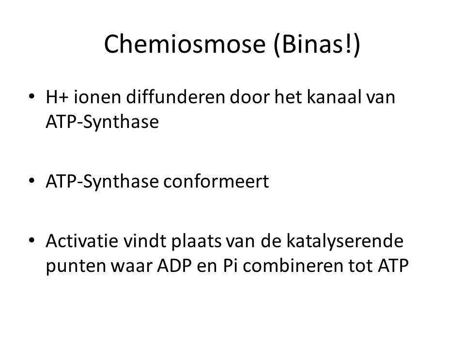 Chemiosmose (Binas!) H+ ionen diffunderen door het kanaal van ATP-Synthase ATP-Synthase conformeert Activatie vindt plaats van de katalyserende punten