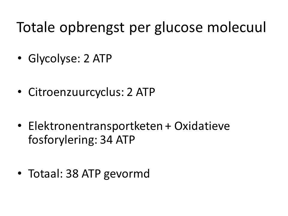 Totale opbrengst per glucose molecuul Glycolyse: 2 ATP Citroenzuurcyclus: 2 ATP Elektronentransportketen + Oxidatieve fosforylering: 34 ATP Totaal: 38