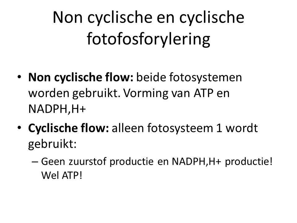 Non cyclische en cyclische fotofosforylering Non cyclische flow: beide fotosystemen worden gebruikt. Vorming van ATP en NADPH,H+ Cyclische flow: allee