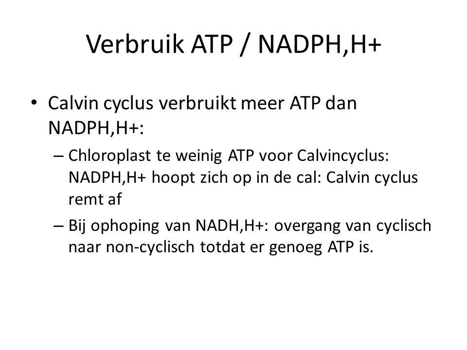 Verbruik ATP / NADPH,H+ Calvin cyclus verbruikt meer ATP dan NADPH,H+: – Chloroplast te weinig ATP voor Calvincyclus: NADPH,H+ hoopt zich op in de cal