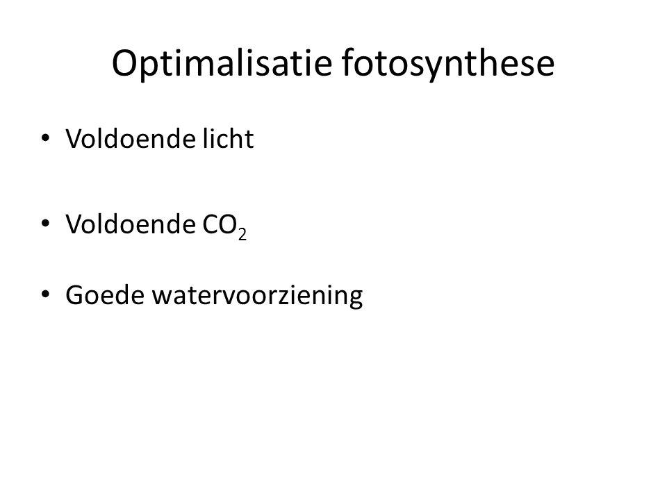 Optimalisatie fotosynthese Voldoende licht Voldoende CO 2 Goede watervoorziening