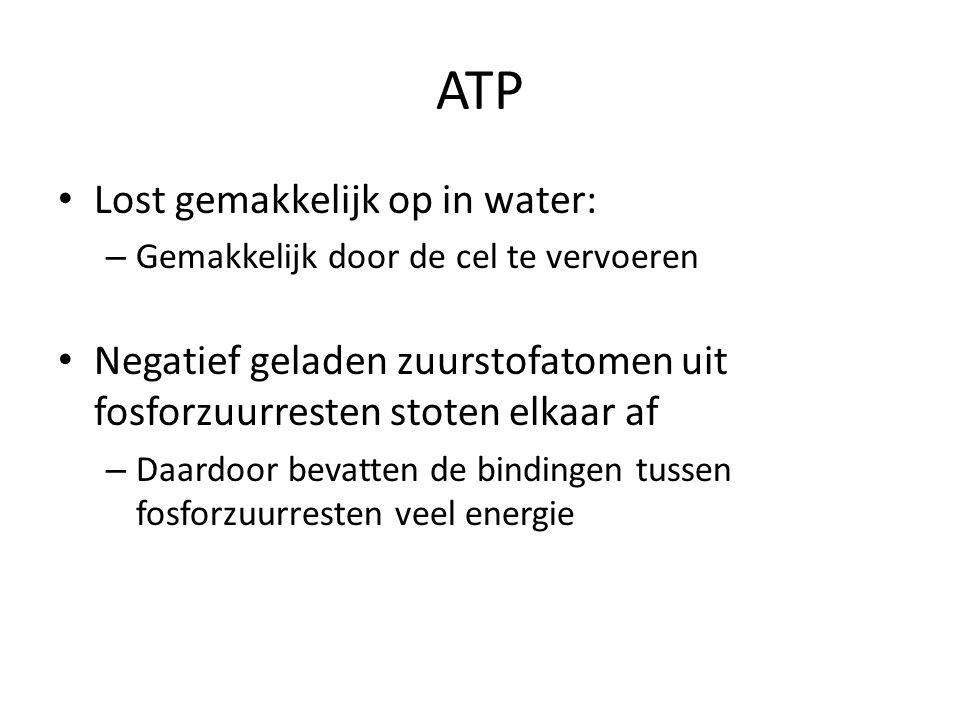 ATP Lost gemakkelijk op in water: – Gemakkelijk door de cel te vervoeren Negatief geladen zuurstofatomen uit fosforzuurresten stoten elkaar af – Daard