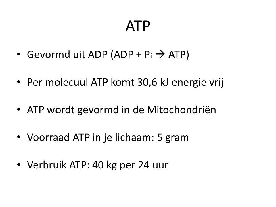 ATP Gevormd uit ADP (ADP + P i  ATP) Per molecuul ATP komt 30,6 kJ energie vrij ATP wordt gevormd in de Mitochondriën Voorraad ATP in je lichaam: 5 g