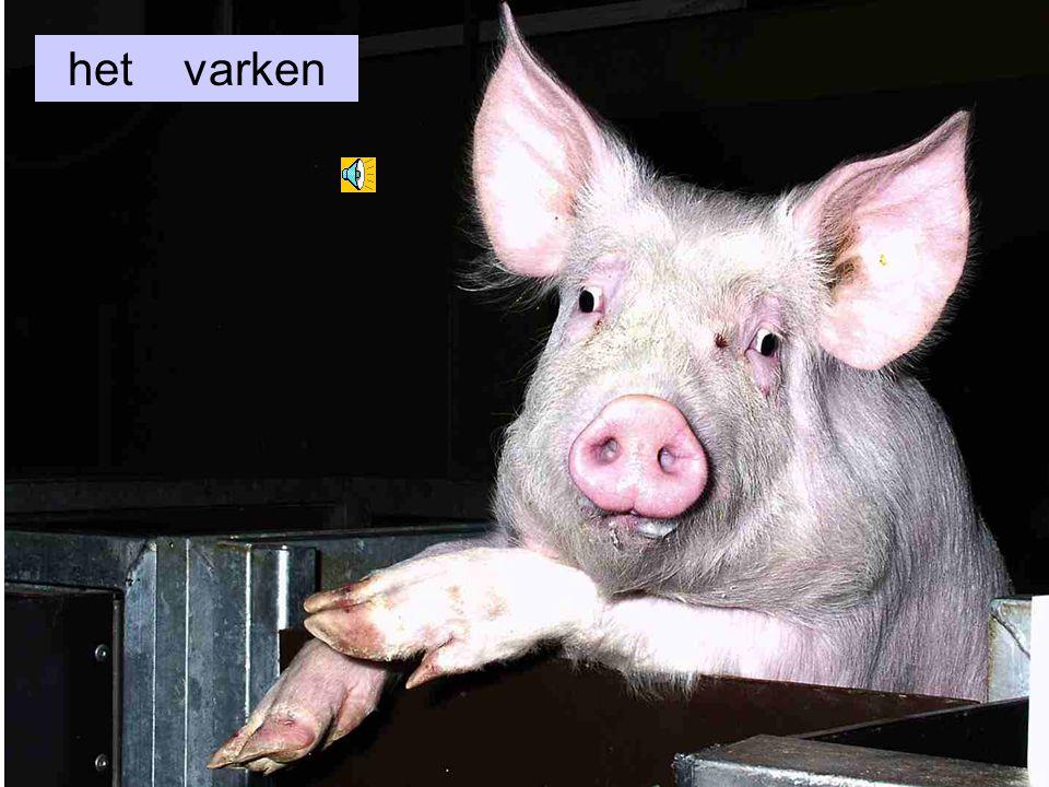 het varken