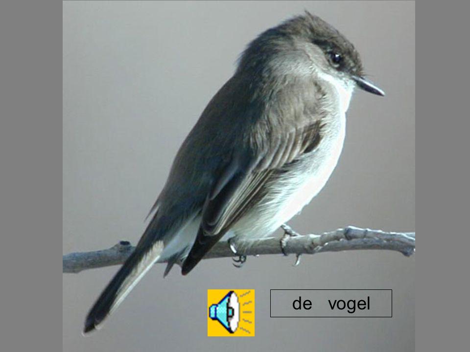 de vogel