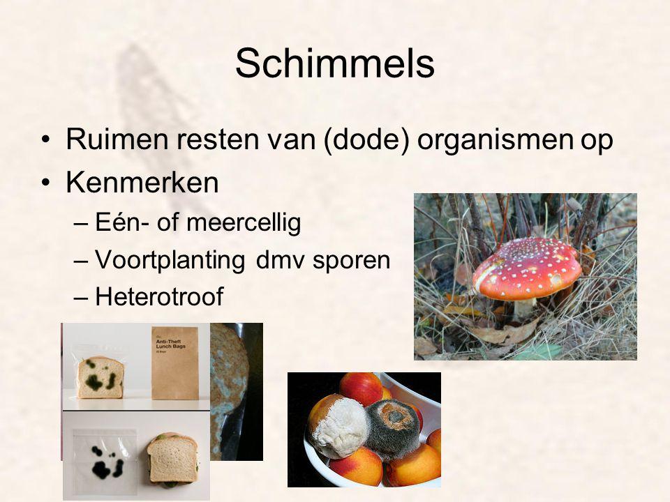 Schimmels Ruimen resten van (dode) organismen op Kenmerken –Eén- of meercellig –Voortplanting dmv sporen –Heterotroof