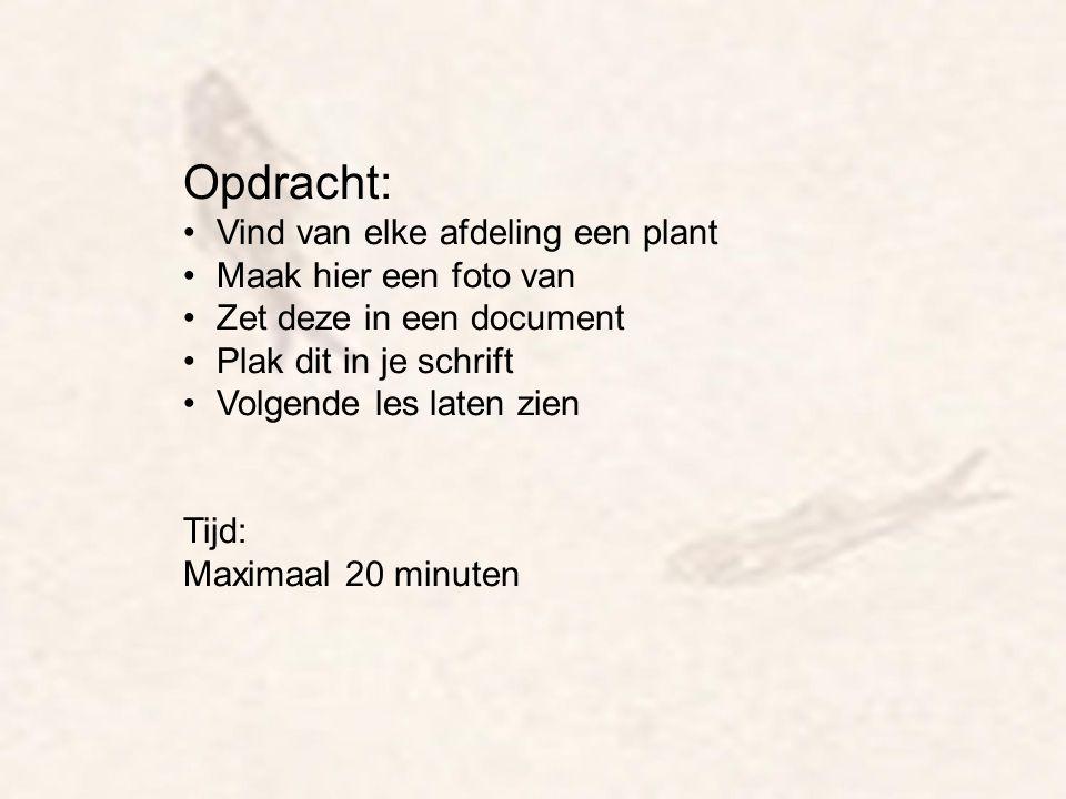 Opdracht: Vind van elke afdeling een plant Maak hier een foto van Zet deze in een document Plak dit in je schrift Volgende les laten zien Tijd: Maxima