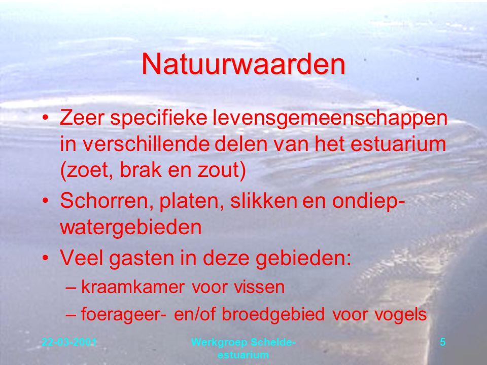 22-03-2001Werkgroep Schelde- estuarium 5 Natuurwaarden Zeer specifieke levensgemeenschappen in verschillende delen van het estuarium (zoet, brak en zo