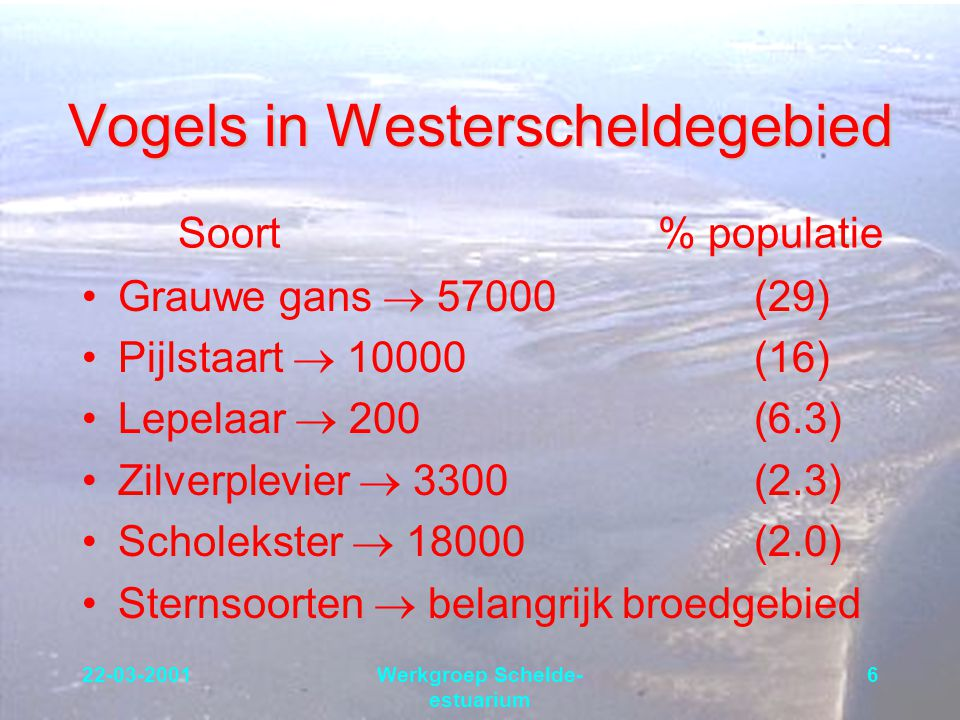 22-03-2001Werkgroep Schelde- estuarium 6 Vogels in Westerscheldegebied Grauwe gans  57000(29) Pijlstaart  10000(16) Lepelaar  200(6.3) Zilverplevie