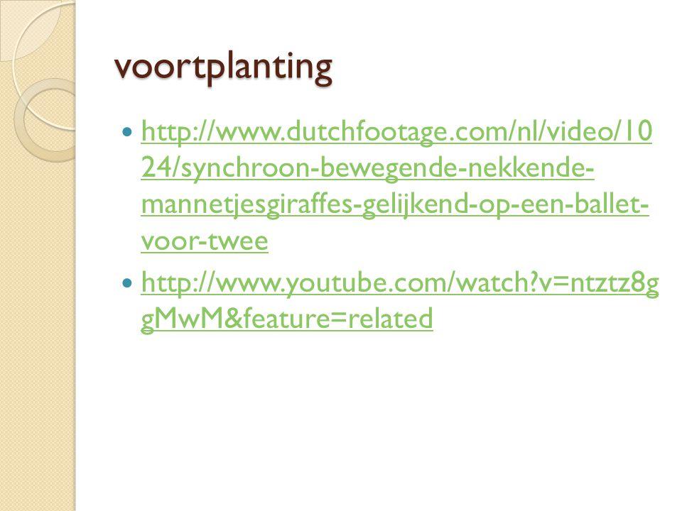 voortplanting http://www.dutchfootage.com/nl/video/10 24/synchroon-bewegende-nekkende- mannetjesgiraffes-gelijkend-op-een-ballet- voor-twee http://www
