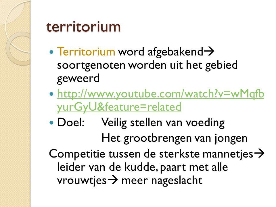 territorium Territorium word afgebakend  soortgenoten worden uit het gebied geweerd http://www.youtube.com/watch?v=wMqfb yurGyU&feature=related http: