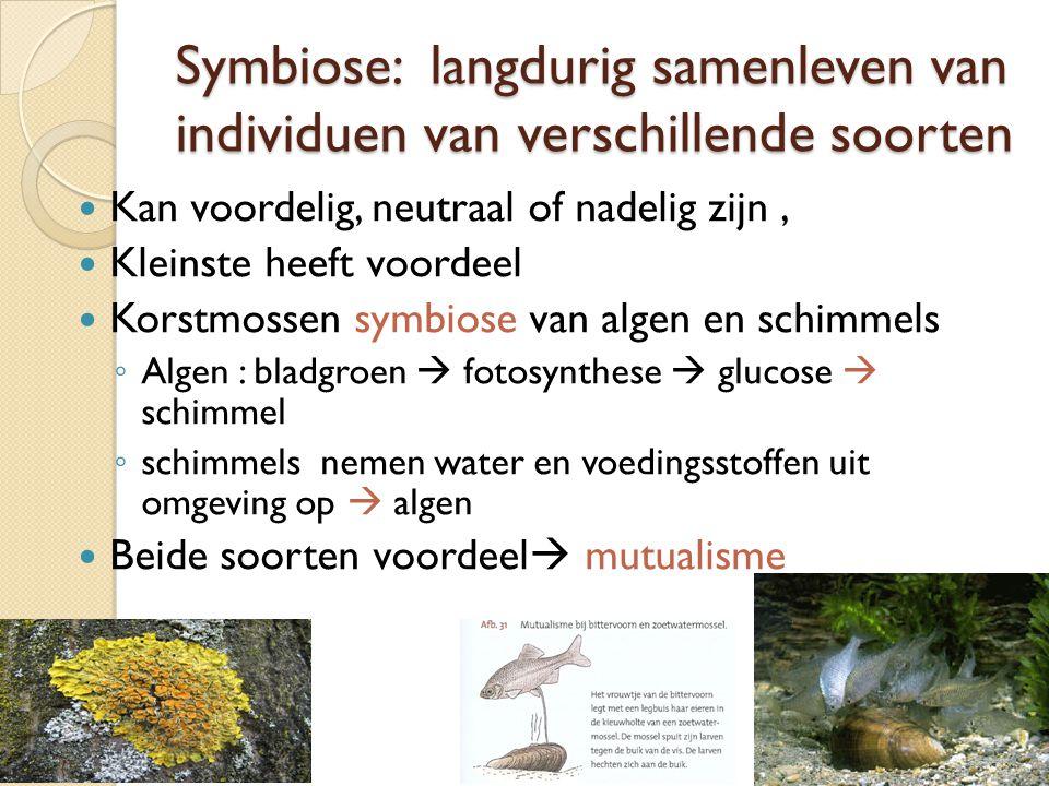 Symbiose: langdurig samenleven van individuen van verschillende soorten Kan voordelig, neutraal of nadelig zijn, Kleinste heeft voordeel Korstmossen symbiose van algen en schimmels ◦ Algen : bladgroen  fotosynthese  glucose  schimmel ◦ schimmels nemen water en voedingsstoffen uit omgeving op  algen Beide soorten voordeel  mutualisme
