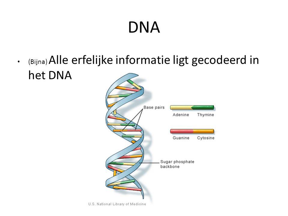 DNA (Bijna) Alle erfelijke informatie ligt gecodeerd in het DNA